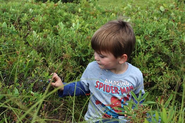 mason picking blueberries