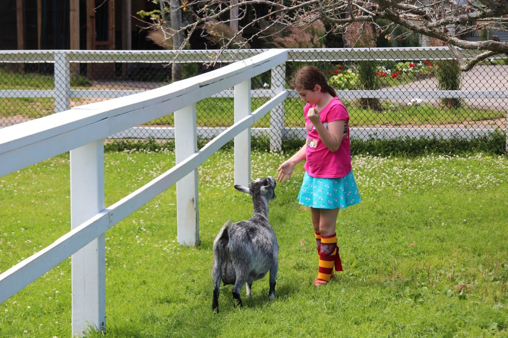Kids love spending time with the goats at the Magnetic Hill Zoo